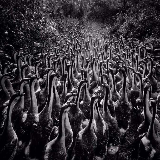 El coleccionista. Por Alfonso Reyes
